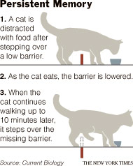 A cat's physical obstacle memory.