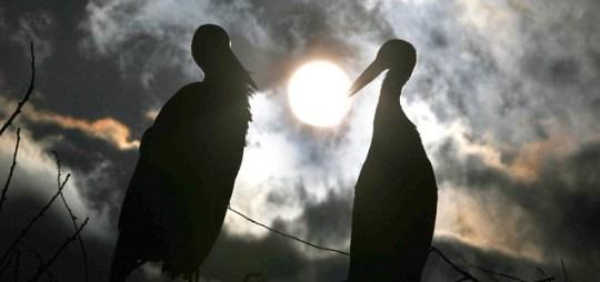 Storks, Malena and Rodan